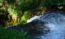 Janjske otoke – dragulj prirode